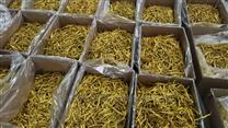 黃花菜網帶式干燥機