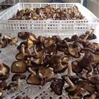空气能香菇烘干机厂家 香菇干燥机