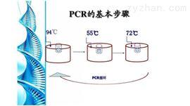 50次百部PCR鉴定试剂盒厂家